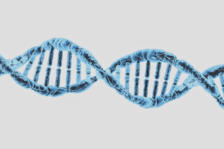 Gen MTHFR